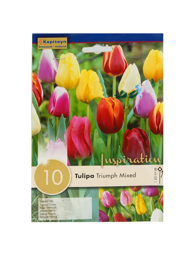 Tulipa Triumph Mixed Seeds