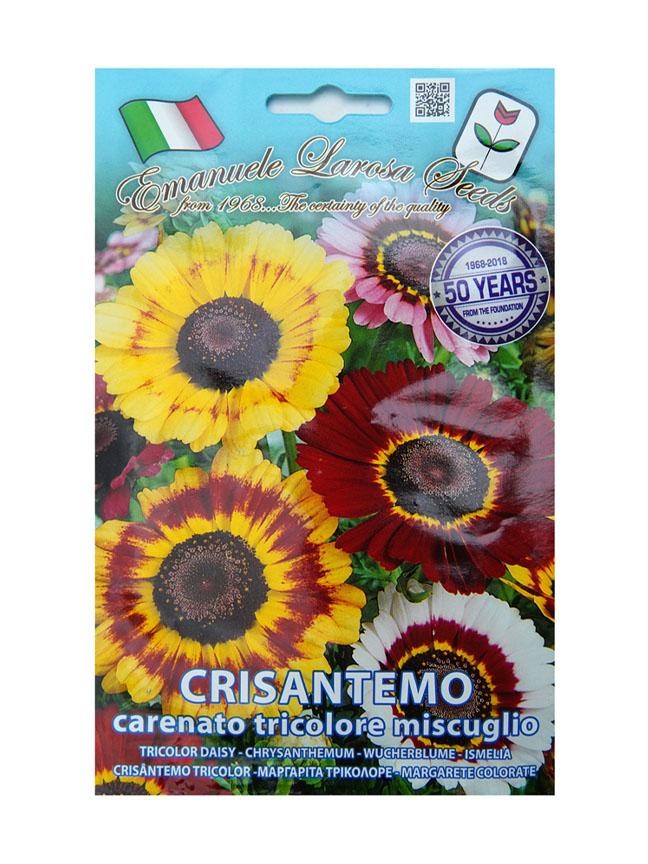 tricolor daisy Seeds