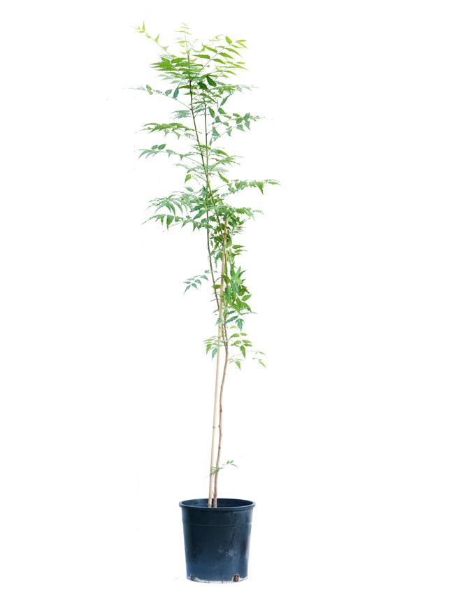 نيم نباتات خارجية