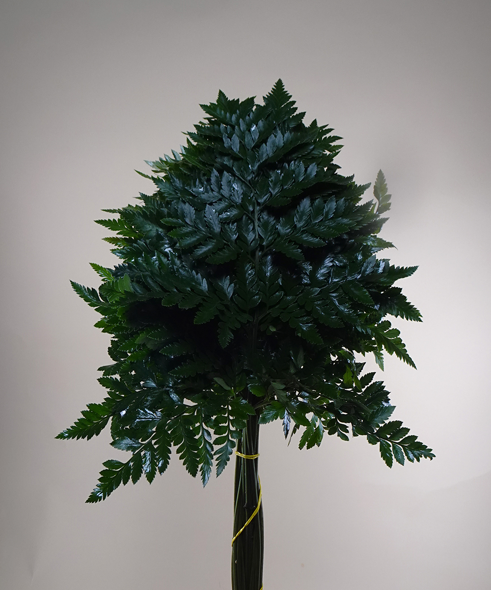 Leather Fern Wholesale Flowers [Special Deals]