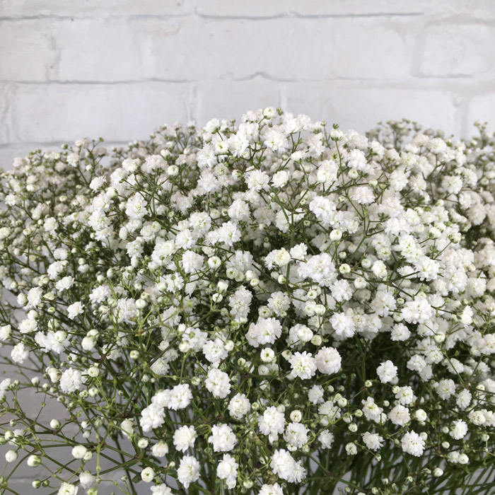 Gypsophila Wholesale Flowers