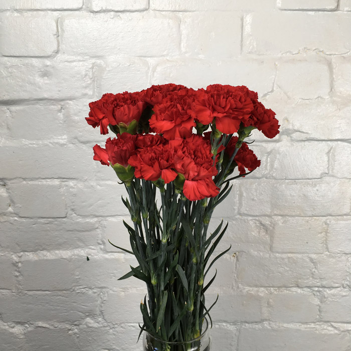 Carnation Red Wholesale Flowers