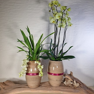 orchids in a vase set - 2 pcs Premium Collection