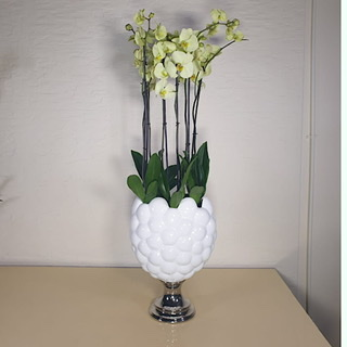 orchid Vase - green Premium Collection