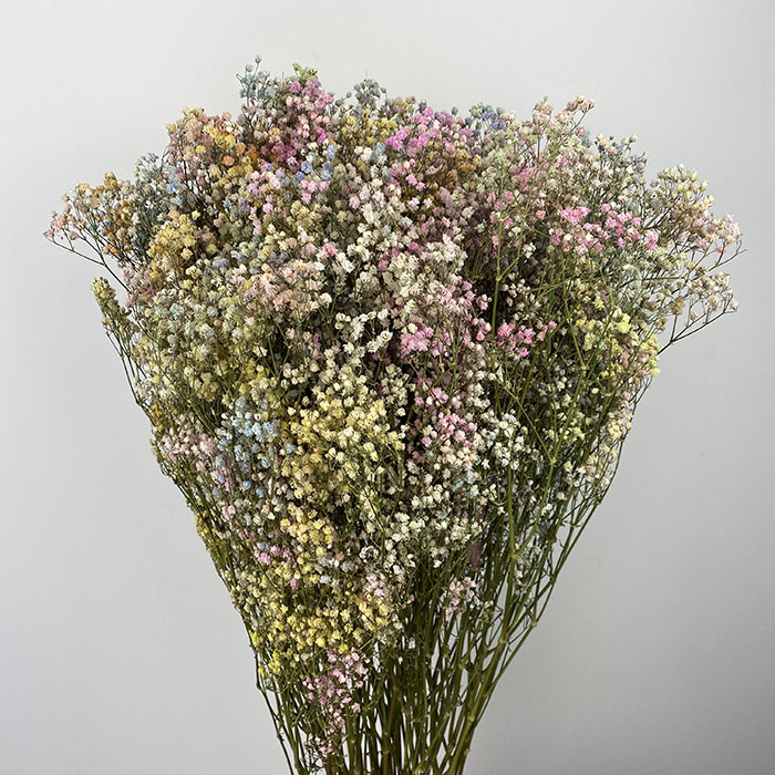 Gypsophila dyed - rainbow mix Wholesale Flowers
