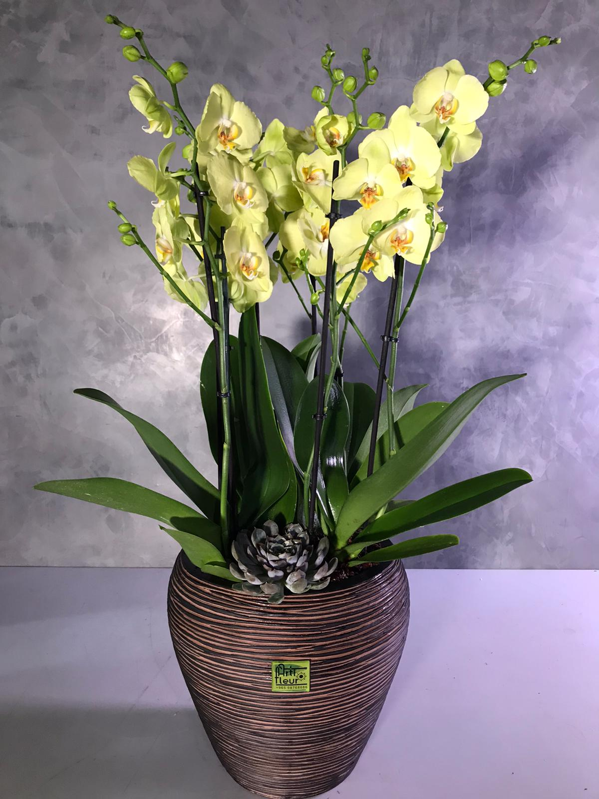 Orchid - Green & yellow  Premium Collection