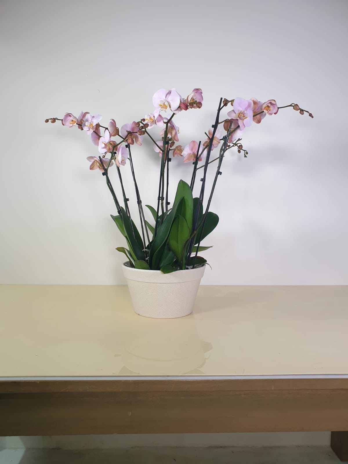 orchids in a planter - pink Premium Collection