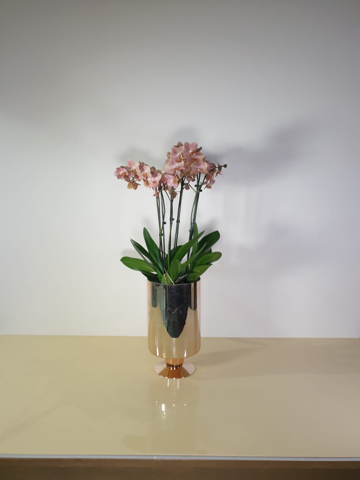 orchids in a glass vase  Premium Collection