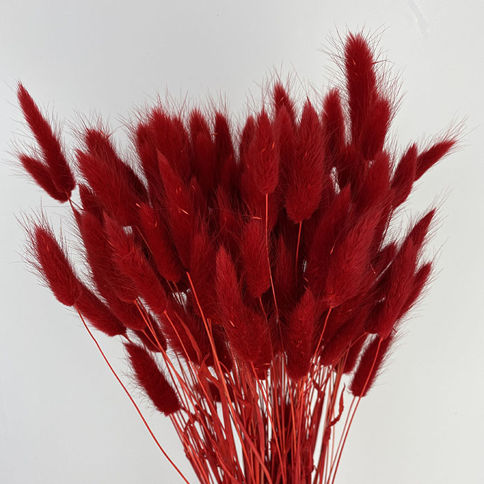 Dried and Bleached Lagurus - red Wholesale Flowers