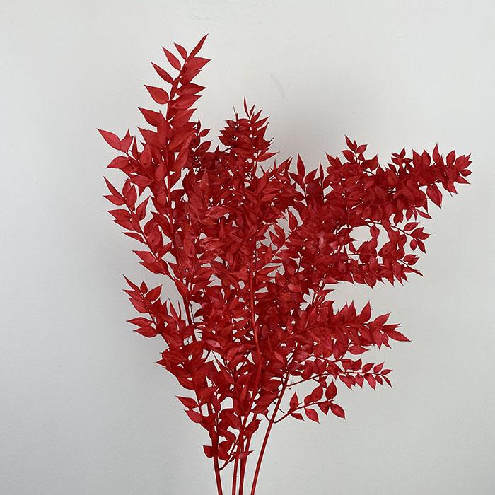 سفندر مسحوب اللون - أحمر  الزهور بالجملة
