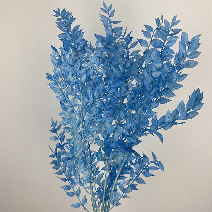 سفندر مسحوب اللون - - أزرق غامق  الزهور بالجملة