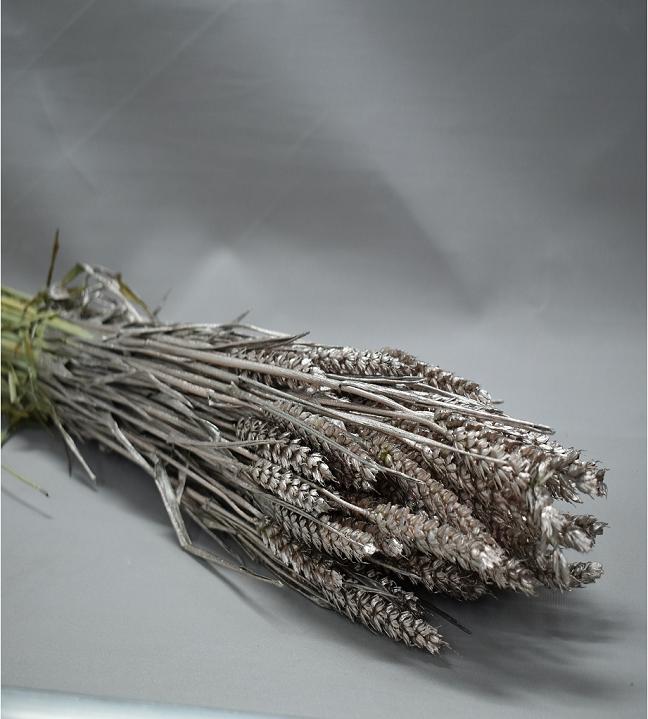 قمح مصبوغ - بلاتينيوم  الزهور بالجملة