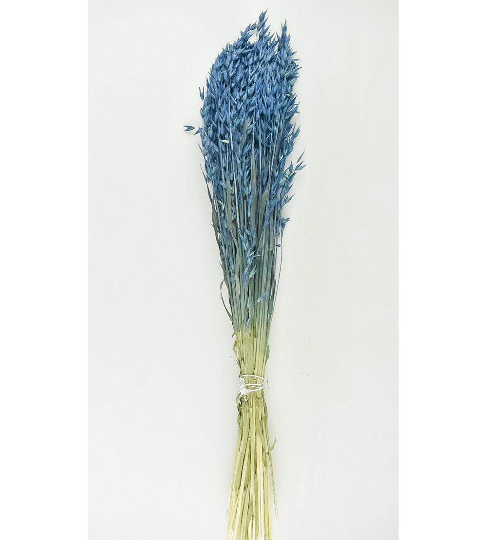 Dyed Oats -  dark blue Wholesale Flowers [Special Deals]