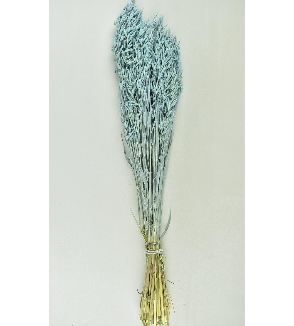 Dyed Oats - Light blue Wholesale Flowers [Special Deals]