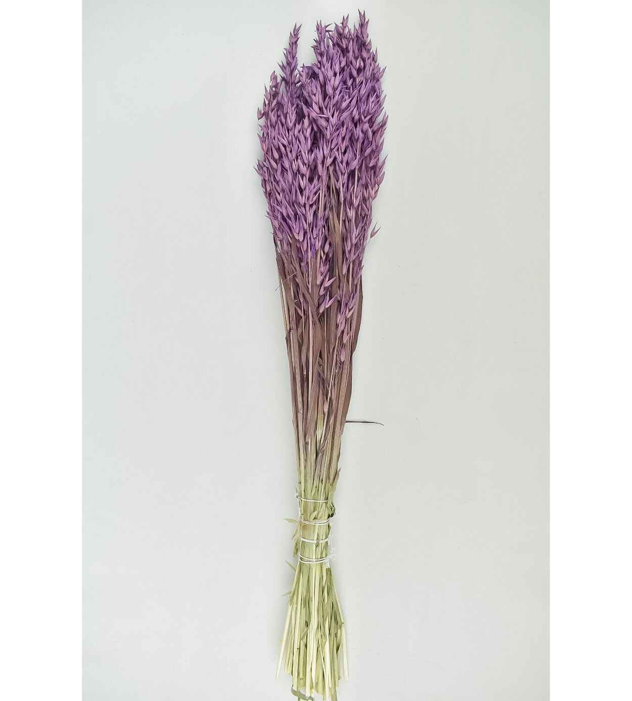 Dyed Oats - Purple Wholesale Flowers [Special Deals] Dried Flowers