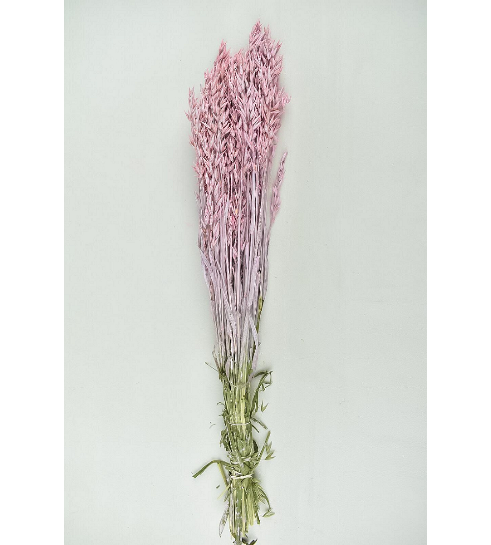 Dyed Oats - Pale pink Wholesale Flowers [Special Deals]