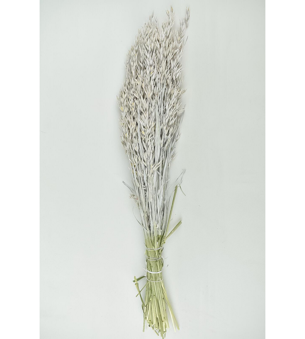 Dyed Oats - White Wholesale Flowers [Special Deals]