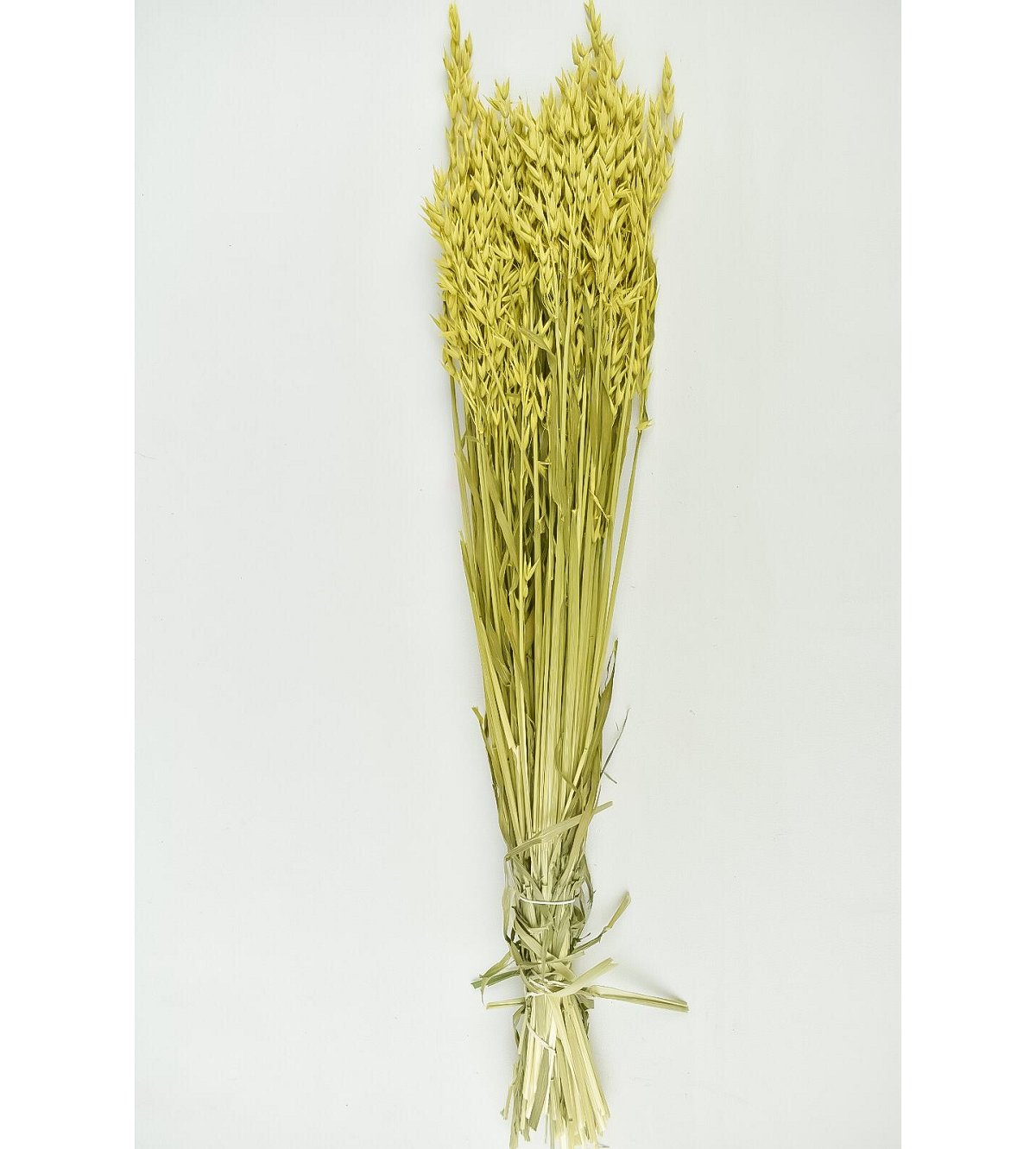 Dyed Oats - Yellow Wholesale Flowers [Special Deals] Dried Flowers