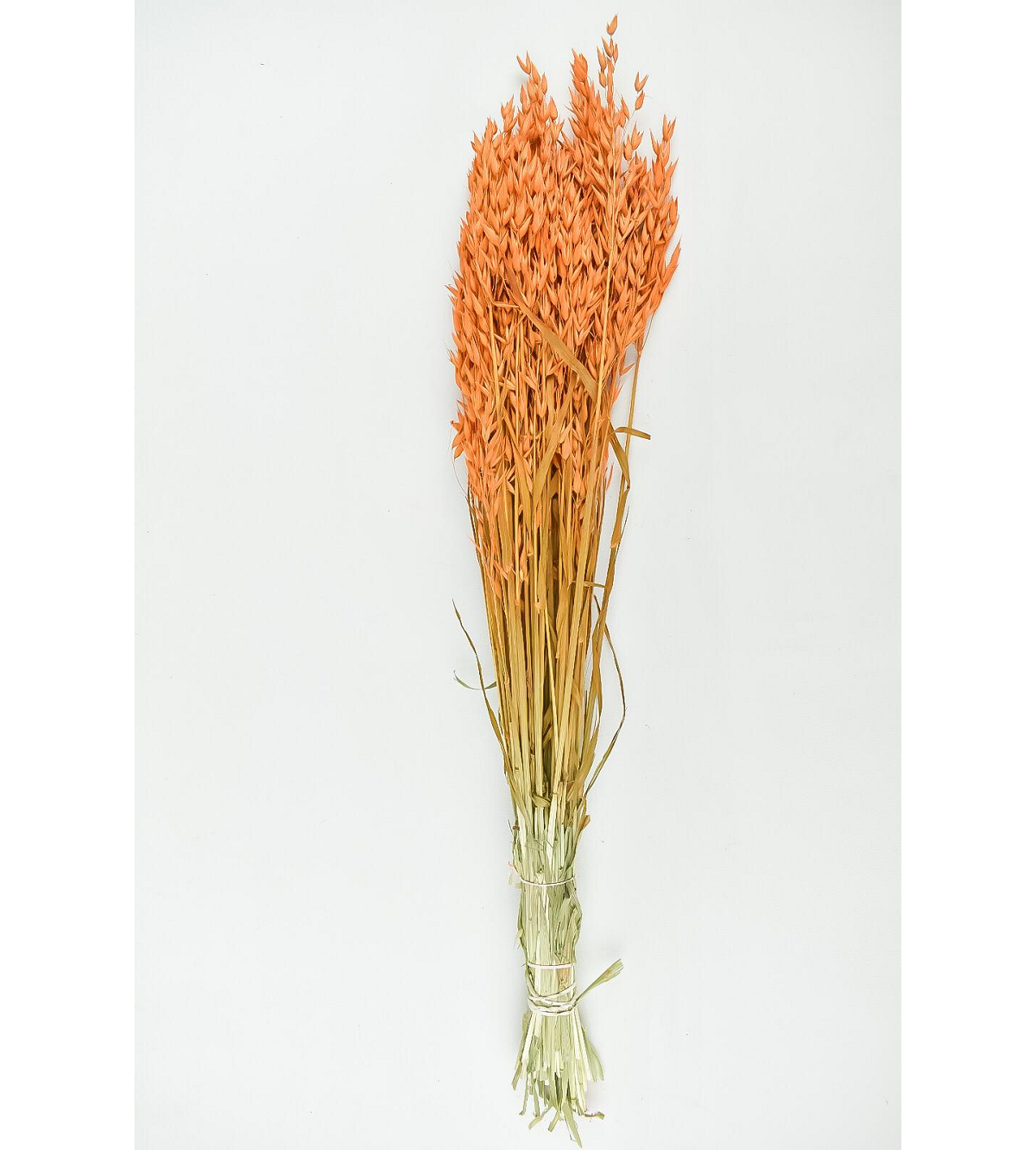 Dyed Oats - Orange Wholesale Flowers [Special Deals] Dried Flowers