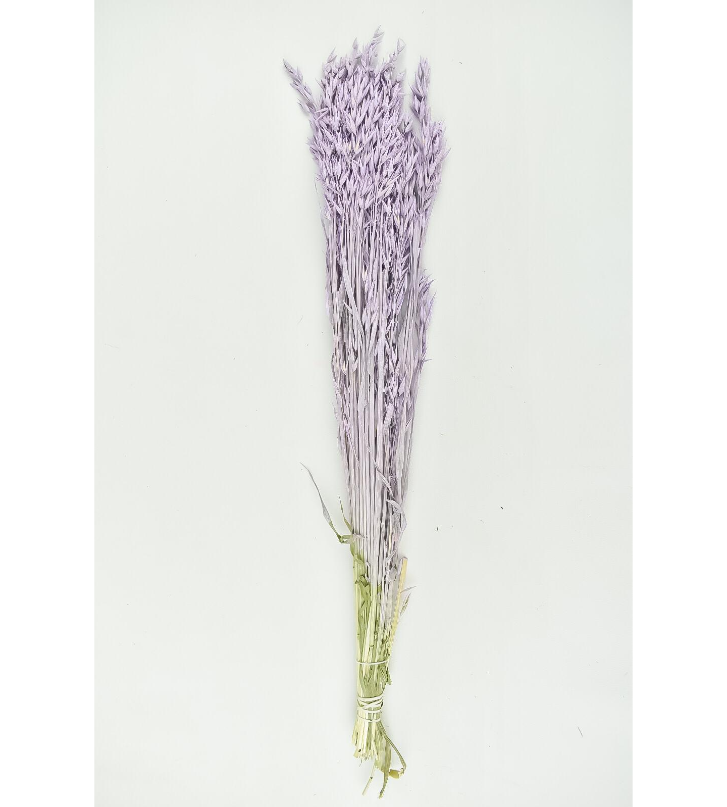 Dyed Oats - Light purple Wholesale Flowers [Special Deals]