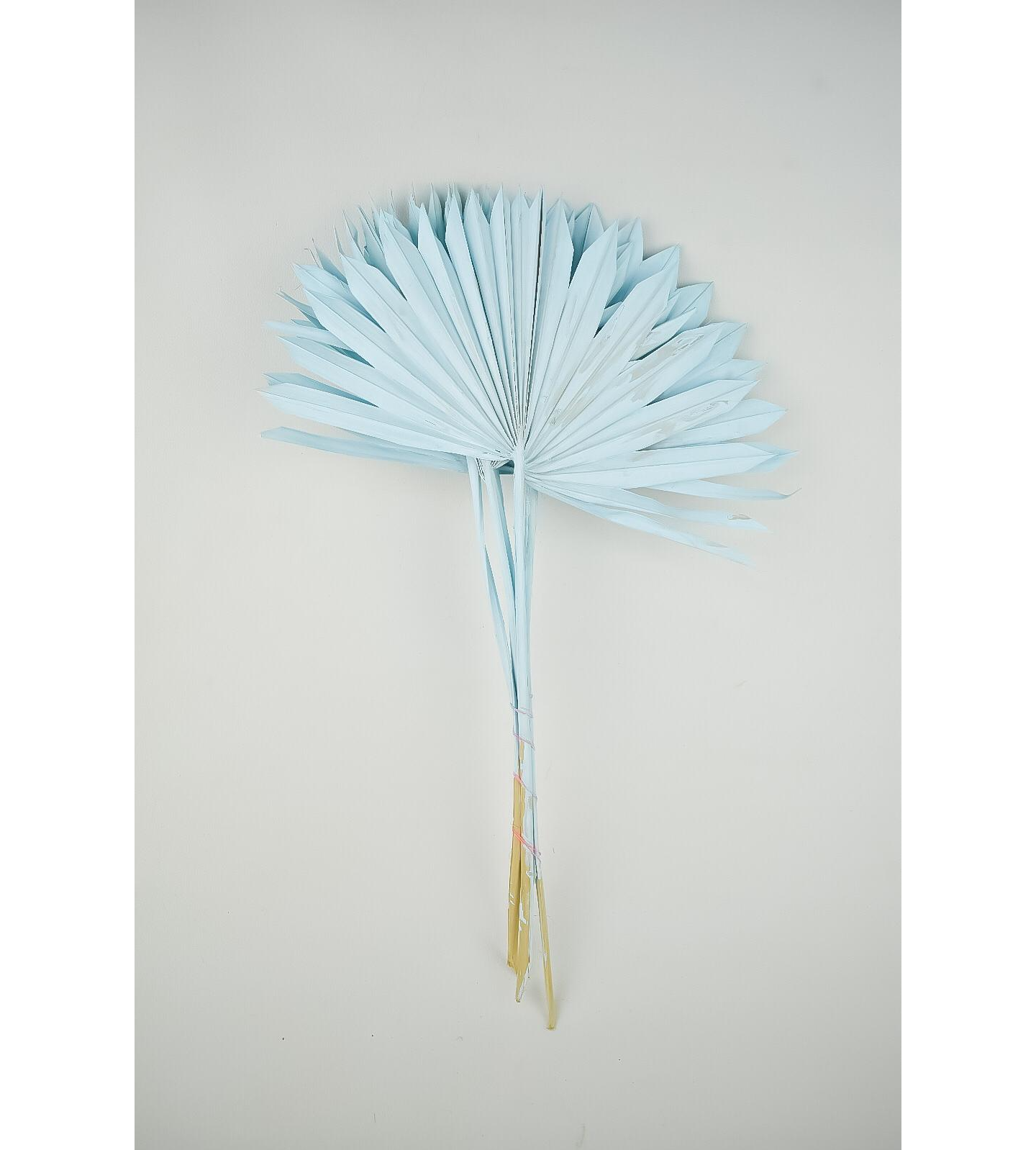 Dyed Palm sun - pale blue Wholesale Flowers [Special Deals]