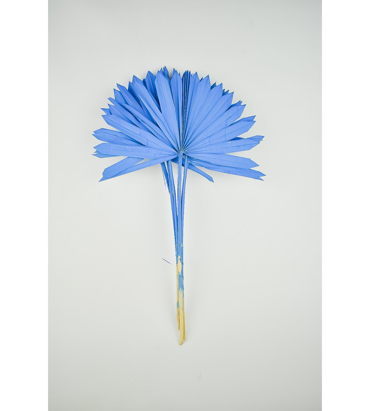 Dyed palm sun -  dark blue Wholesale Flowers [Special Deals]