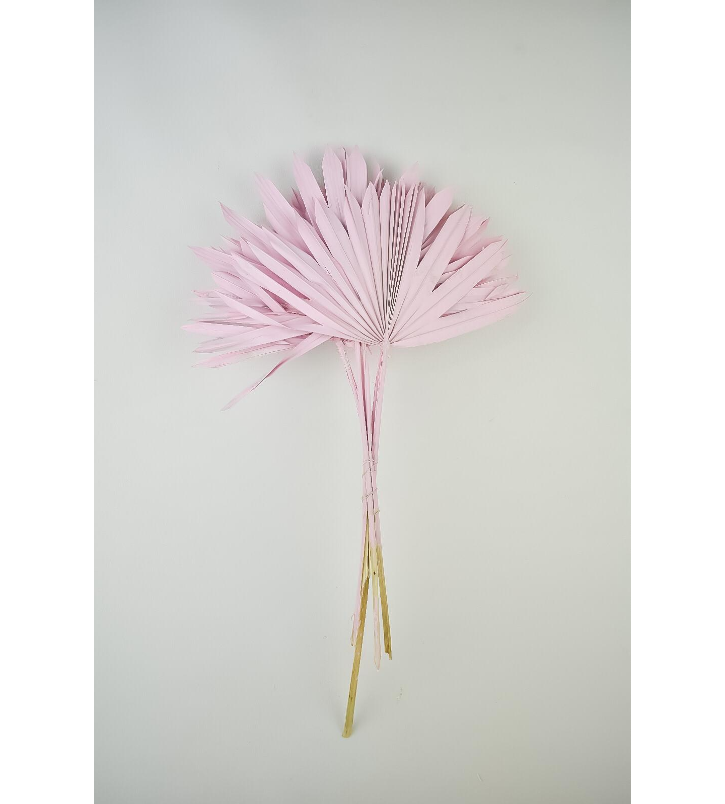 Dyed palm sun - pale pink Wholesale Flowers [Special Deals]