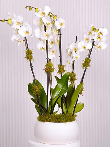 White On White  Indoor Plants