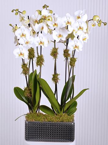 Black X White  Indoor Plants