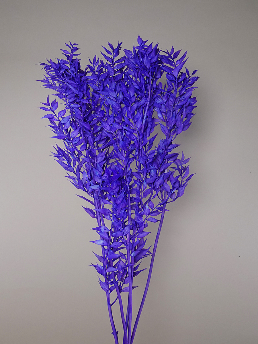 Dried Ruscus - Purple Wholesale Flowers