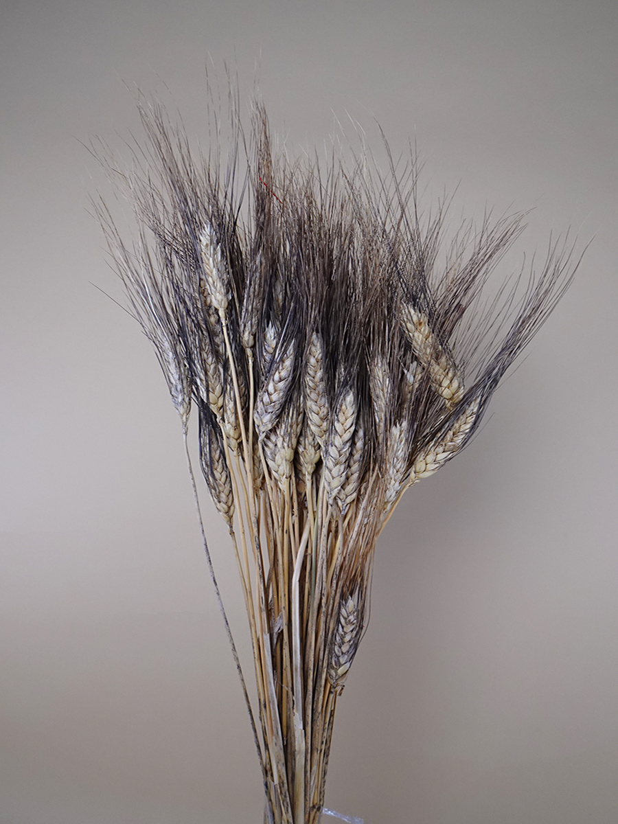 Dried Tritium Blackwisps Wholesale Flowers