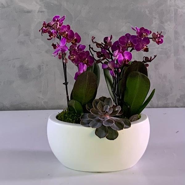 مزهرية ميدي تيرازو مع زهور الأوركيد التشكيلة الفخمة