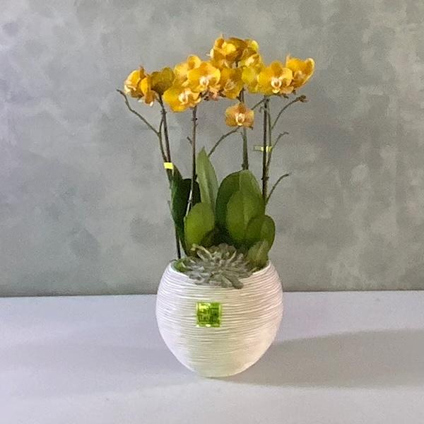 مزهرية أوركيد - ذهبي التشكيلة الفخمة