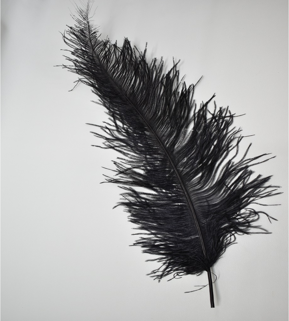Ostrich feather - black Wholesale Flowers