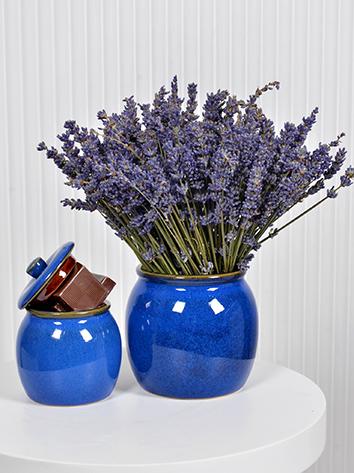Royal Blue lavender  Premium Collection