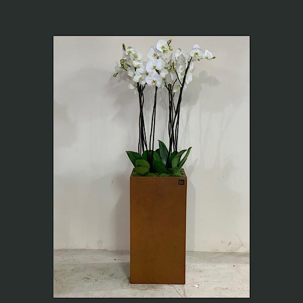 زهور الأوركيد التشكيلة الفخمة