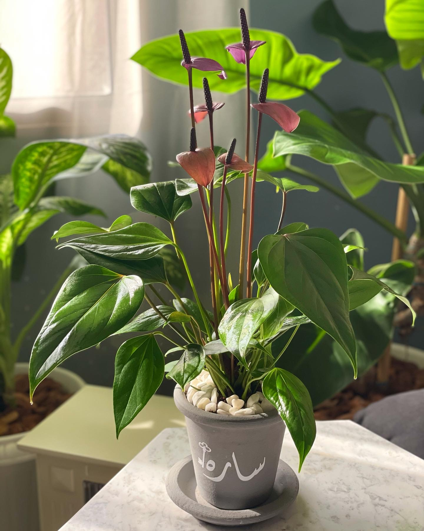 Peace Lily in a customized pot Gifts