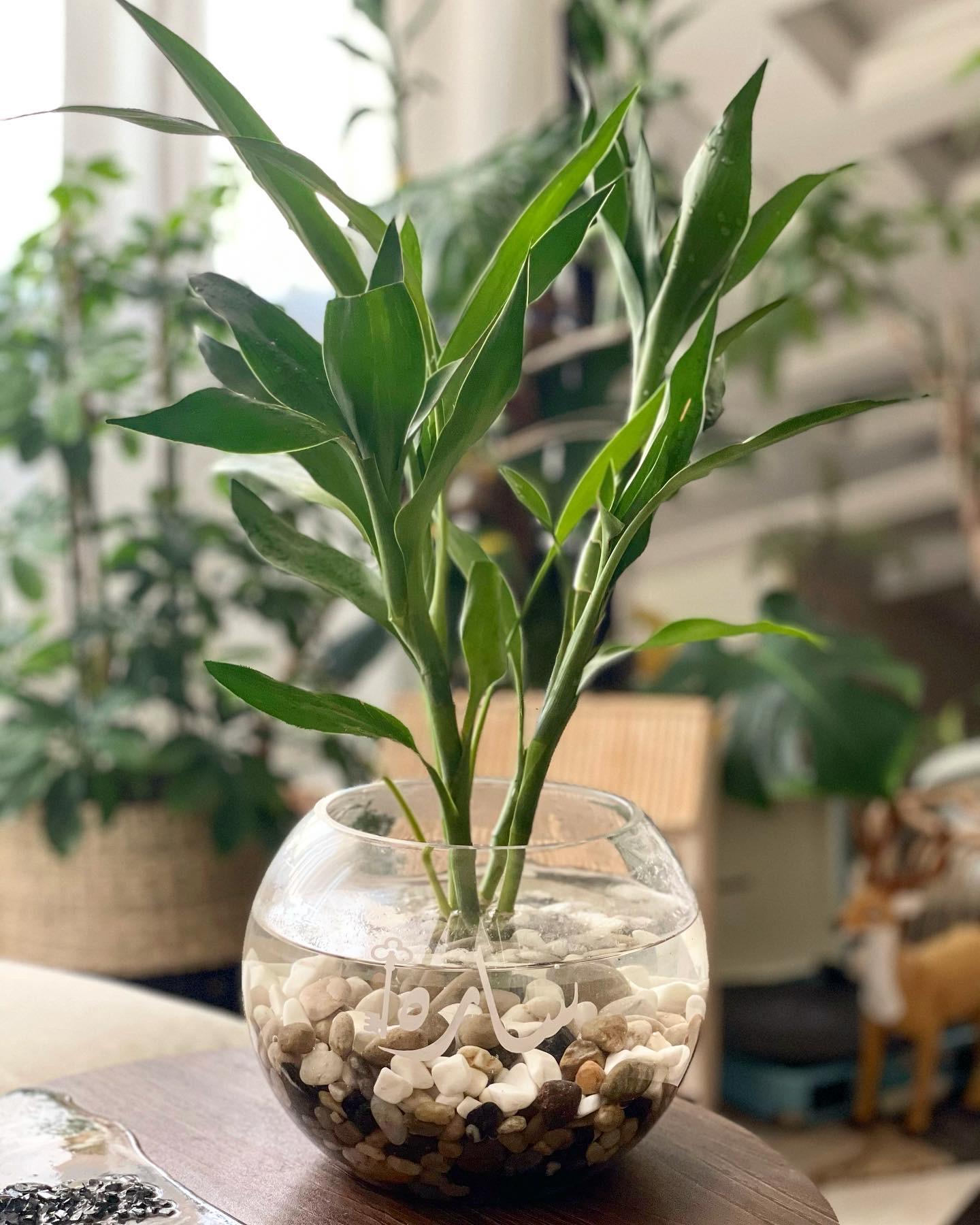 bambo vase Gifts