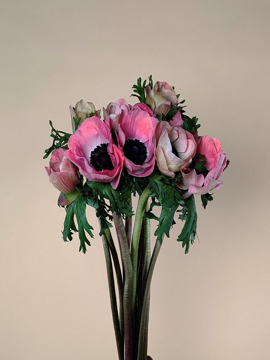 انيمون وردي  الزهور بالجملة