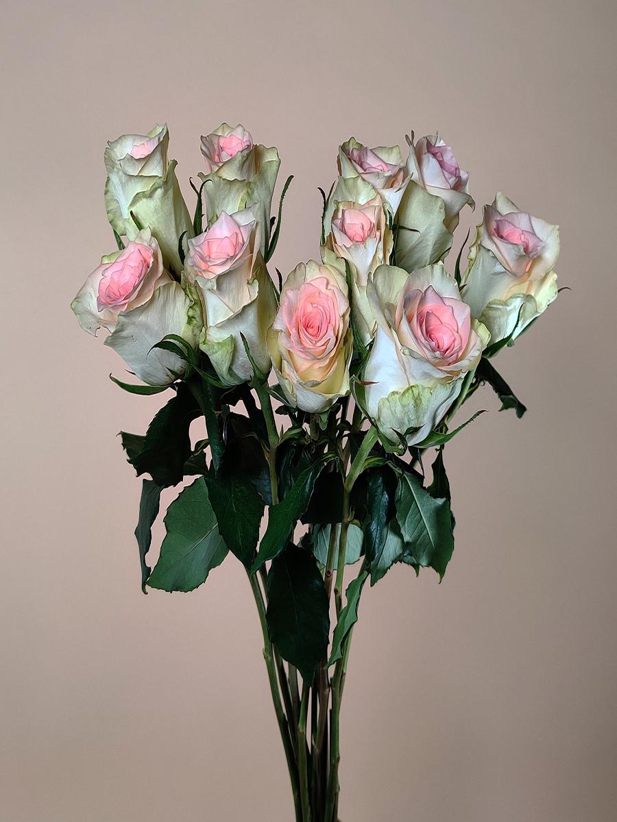 روز ديوديت  الزهور بالجملة