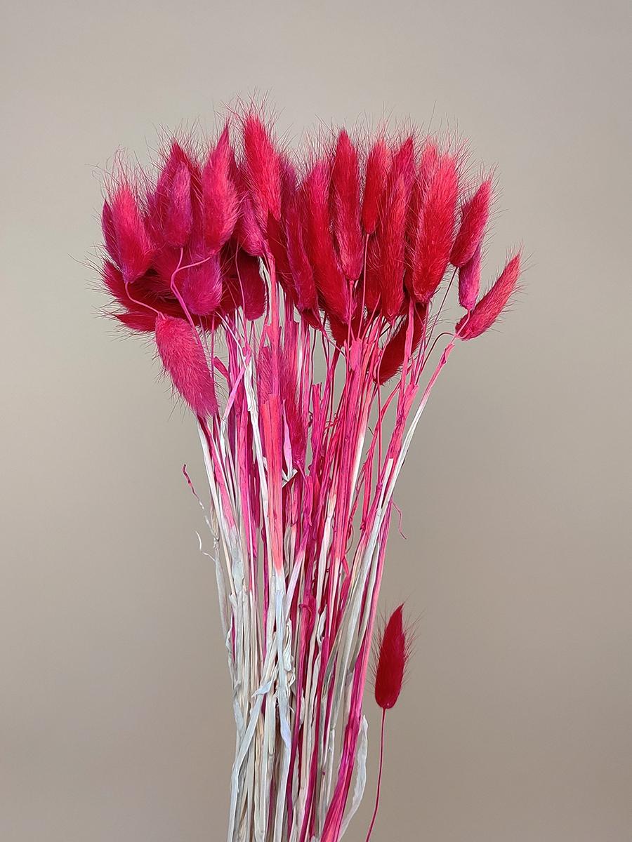 لاجروس مجفف - فوشيا  الزهور بالجملة