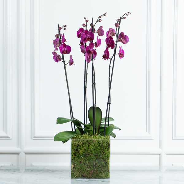 Orchids In A Glass Mother's day
