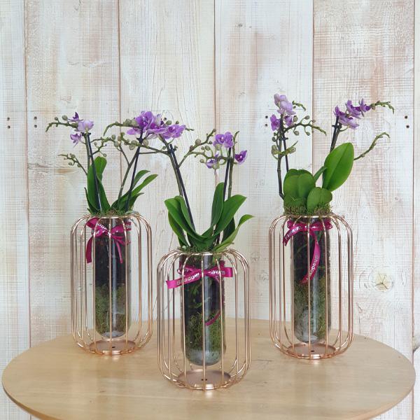 3 Mini Orchids - Purple   Ramadan Collection