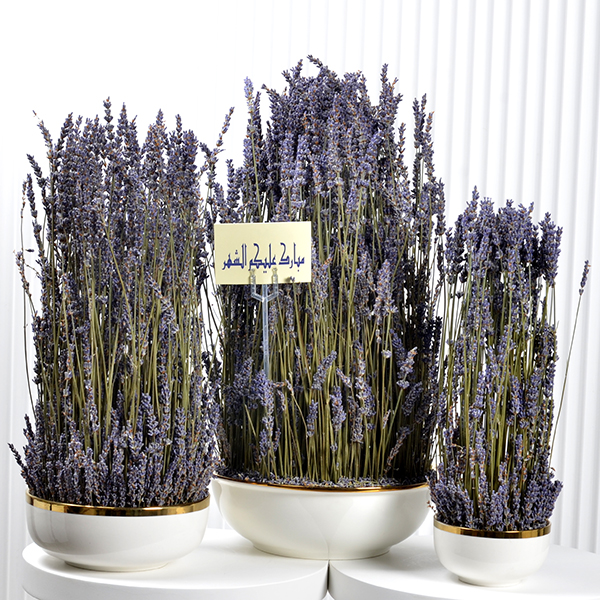 Lavender Family Set  Premium Collection