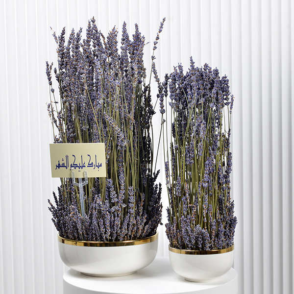 Double Lavender  Premium Collection