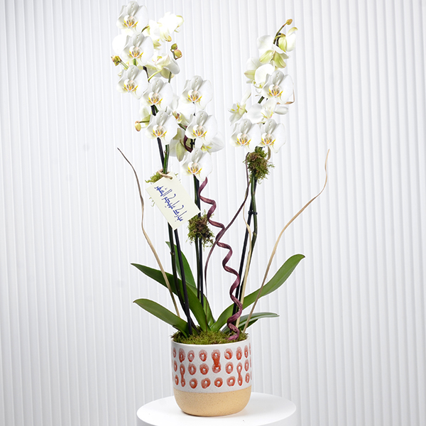 Orchids welcome  Ramadan Collection
