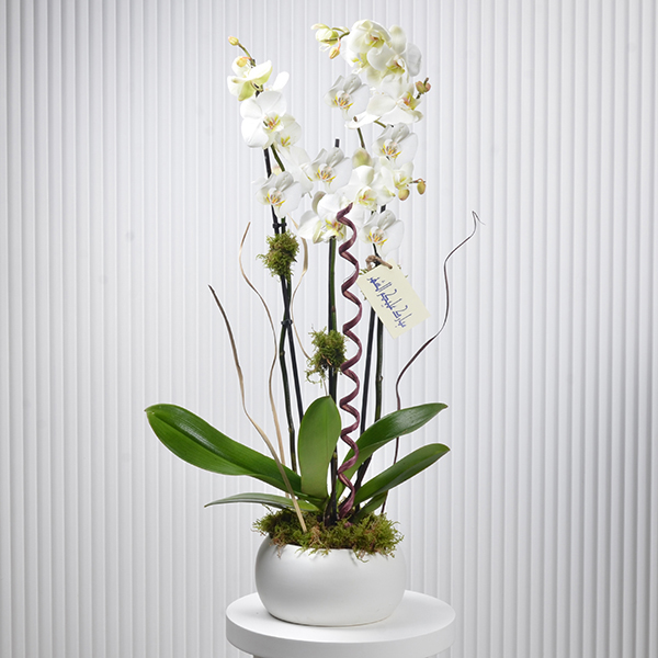 classic orchids  Premium Collection