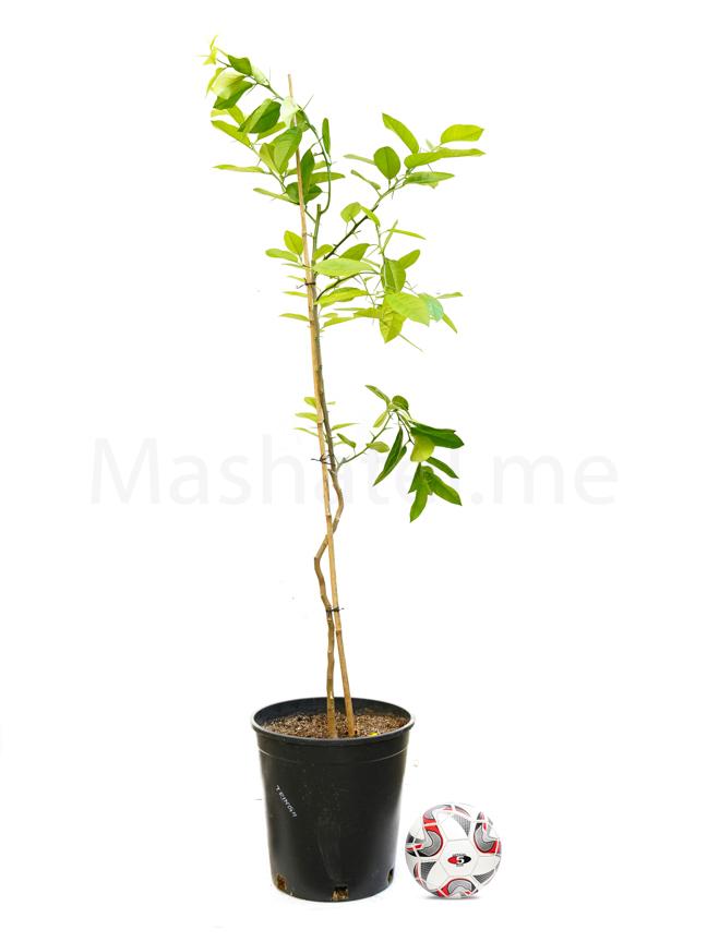 Tringh 'Outdoor Plants'