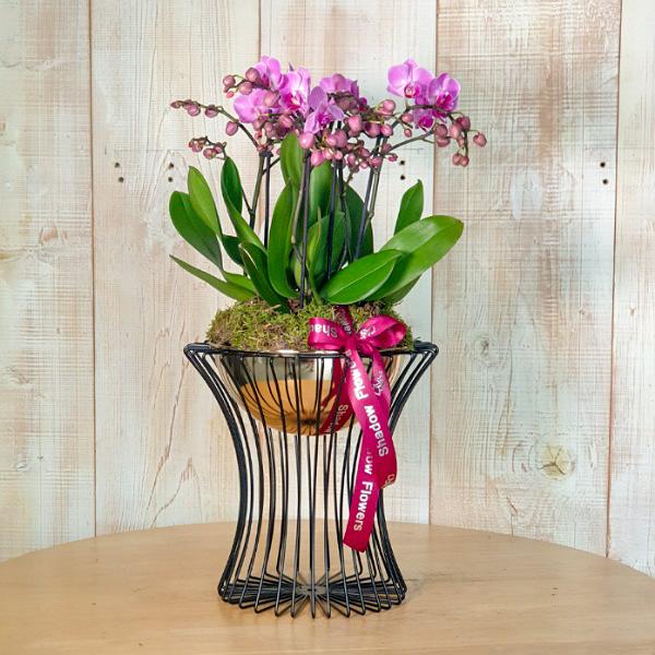 Black&Gold Orchids1 Premium Collection