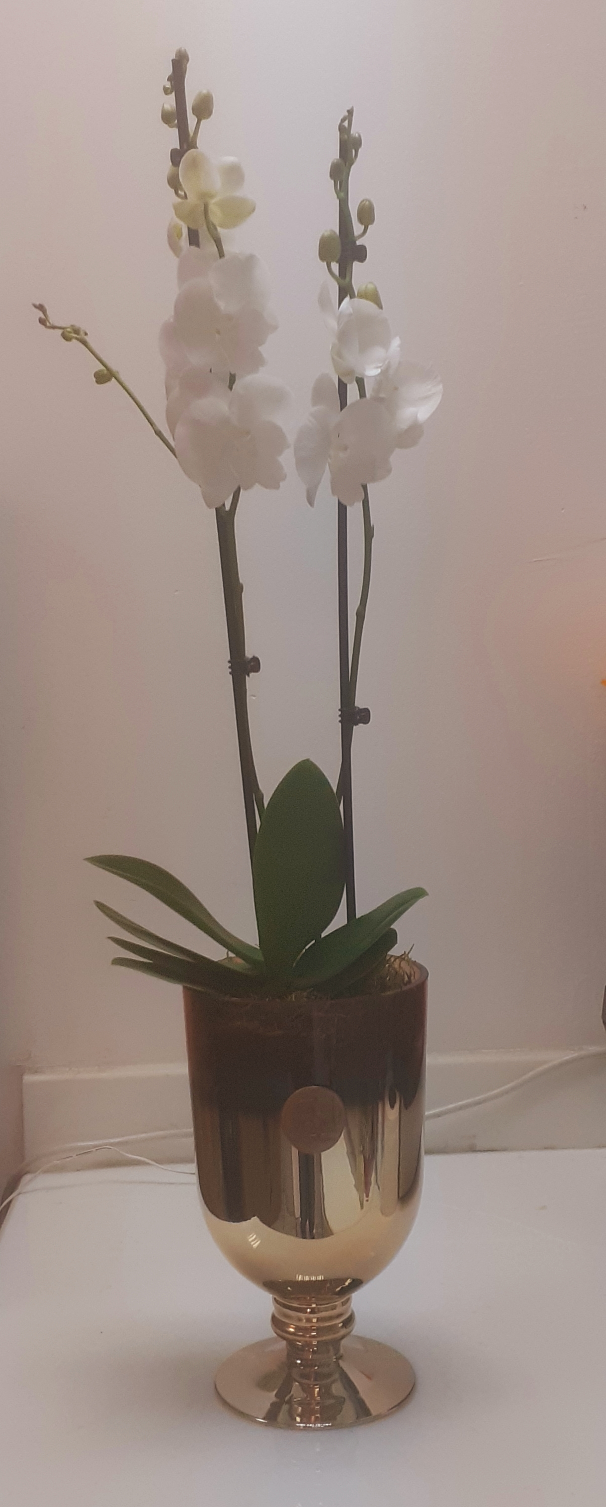 Orchid In Gold Vase Indoor Plants